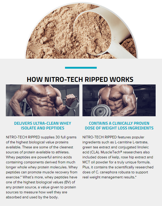 MUSCLETECH NITROTECH RIPPED, CHOCOLATE, 2 LBS PRODUCT DETAILS